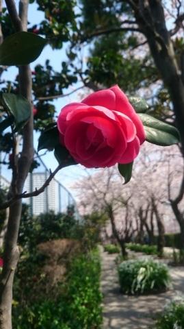 © Sakura_Fujiko