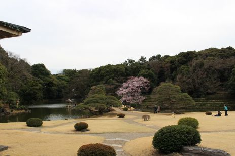 Hanami 2016 (11)