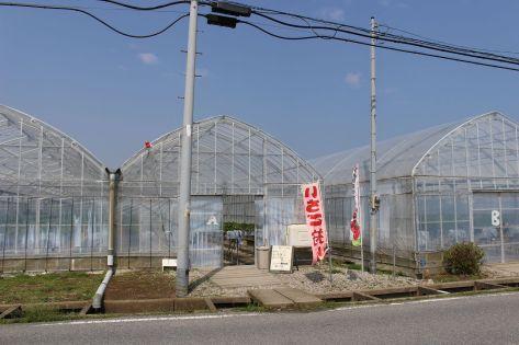 Ichigo-gari